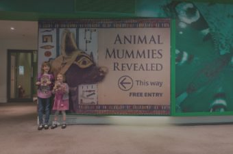 'Animal Mummies Revealed' at the World Museum: behind the scenes