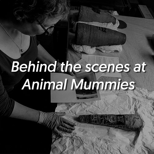 Behind the scenes at Animal Mummies