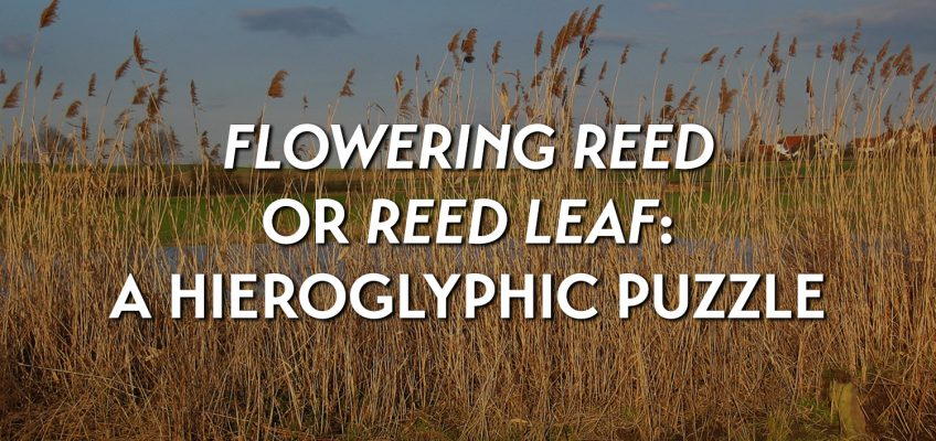 Flowering reed or reed leaf? A hieroglyphic puzzle