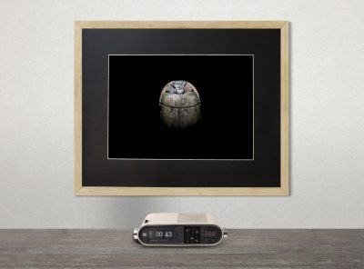 product image for emerging dawn fine-art print of an ancient egyptian scarab